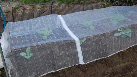 1-16.09.11 菜園-23.jpg