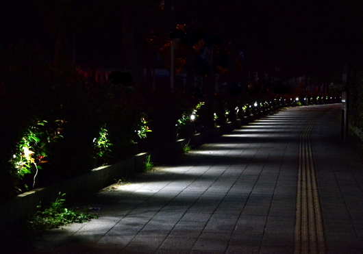 1-16.09.16 早朝散歩-0.jpg