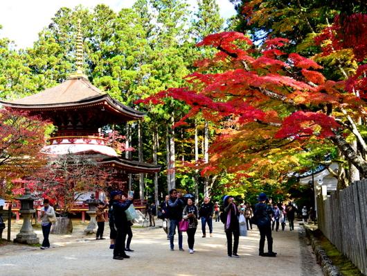 1-16.11.12 金剛峯寺周辺の紅葉-3.jpg