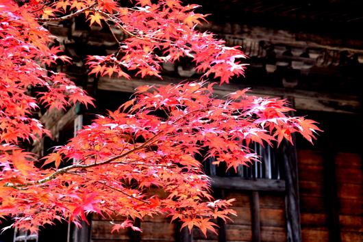 1-16.11.12 金剛峯寺周辺の紅葉-4.jpg