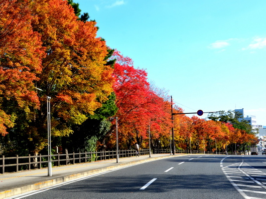 1-16.11.18 和歌山城公園の紅葉-1.jpg