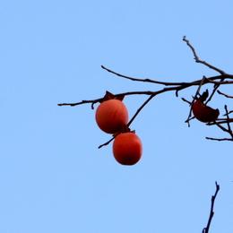 1-16.11.18 和歌山城公園の紅葉-6.jpg