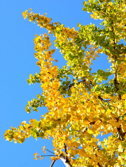 1-16.11.18 和歌山城公園の紅葉-8.jpg