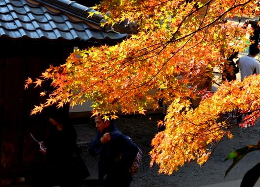 1-16.11.26 香嵐渓の紅葉-10.jpg