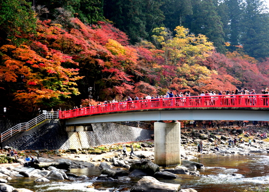 1-16.11.26 香嵐渓の紅葉-2.jpg
