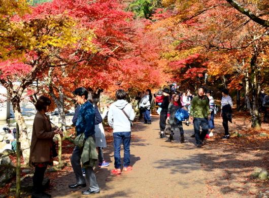 1-16.11.26 香嵐渓の紅葉-7.jpg