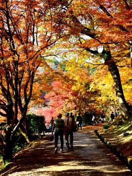 1-16.11.26 香嵐渓の紅葉-9.jpg