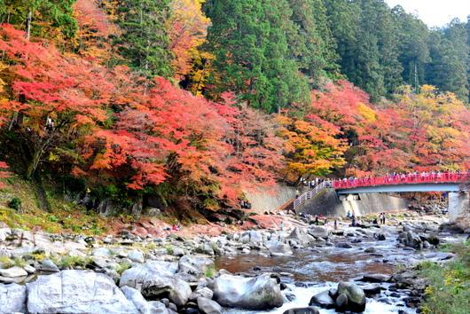 1-16.11.28 香嵐渓の紅葉-12.jpg