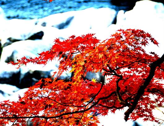 1-16.11.28 香嵐渓の紅葉-4.jpg