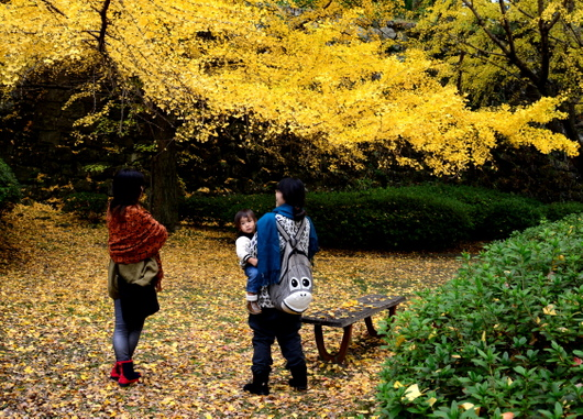 1-16.12.03 銀杏-3.jpg