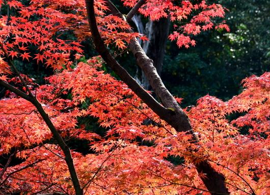 1-16.12.05 紅葉渓庭園-1.jpg