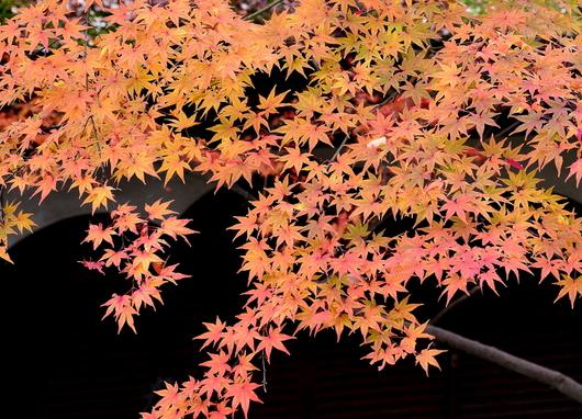 1-16.12.05 紅葉渓庭園-3.jpg