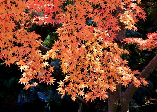 1-16.12.05 紅葉渓庭園-4.jpg