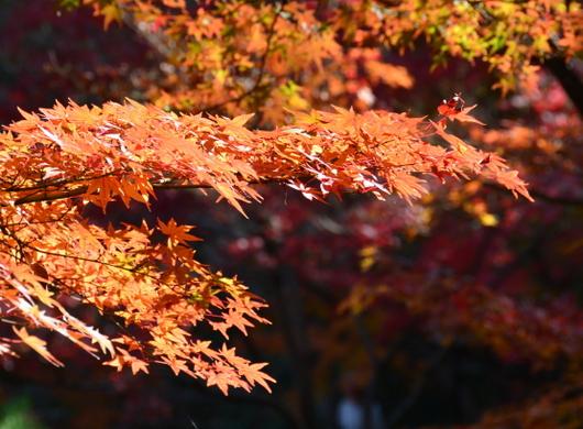 1-16.12.05 紅葉渓庭園-5.jpg
