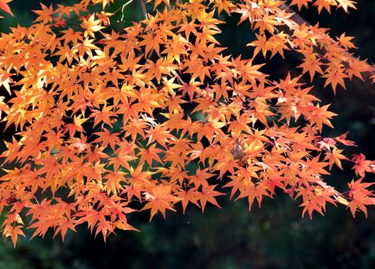 1-16.12.05 紅葉渓庭園-6.jpg