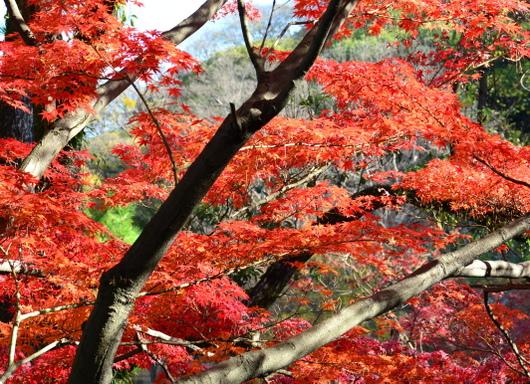 1-16.12.05 紅葉渓庭園-9.jpg