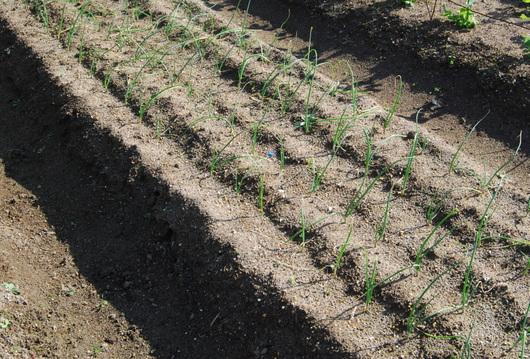 1-16.12.14 菜園-3.jpg