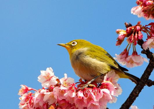 1-17.02.13 嘉ヶ作の桜-7.jpg
