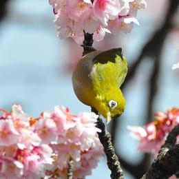 1-17.02.13 嘉ヶ作の桜-9.jpg