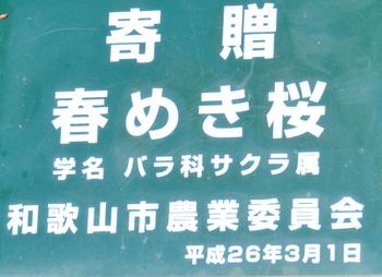 1-17.03.29 春めき桜説明.jpg