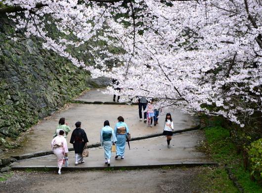 1-17.04.09 城内桜-10.jpg