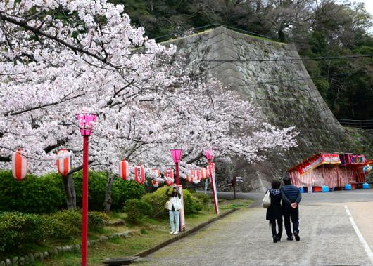 1-17.04.09 城内桜-2.jpg