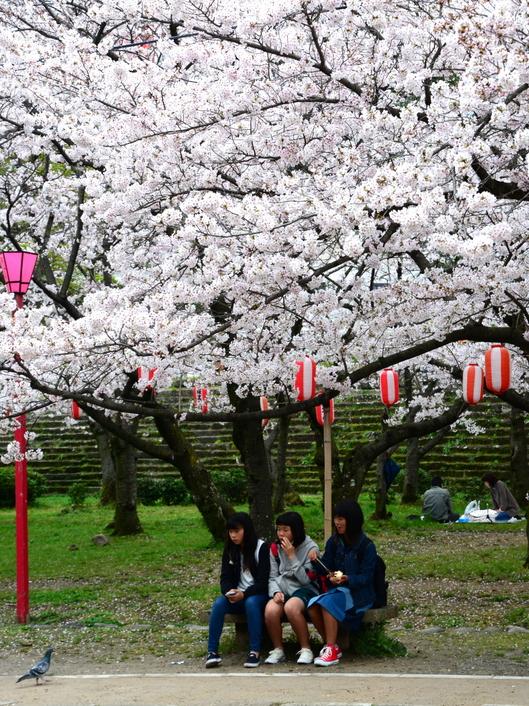 1-17.04.09 城内桜-5.jpg