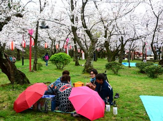 1-17.04.09 城内桜-6.jpg