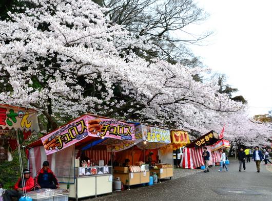 1-17.04.09 城内桜-7.jpg