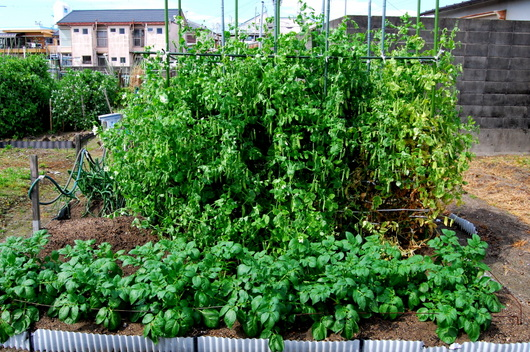 1-17.04.21 菜園-1.jpg