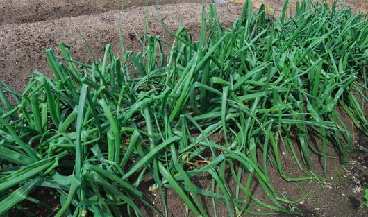 1-17.04.21 菜園-2.jpg