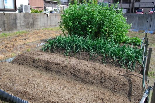 1-17.04.21 菜園-4.jpg