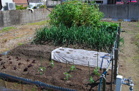 1-17.05.03 菜園-1.jpg