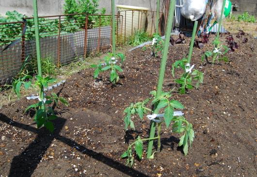 1-17.05.03 菜園-3.jpg