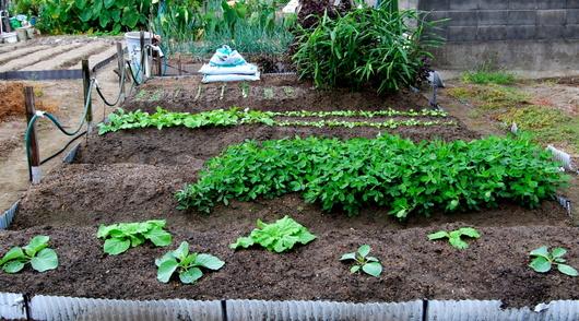 1-17.09.21 菜園-1.jpg