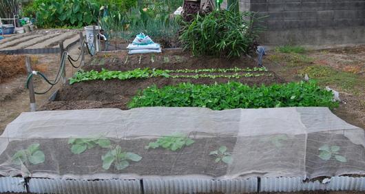 1-17.09.21 菜園-10.jpg