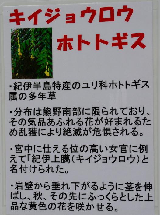 1-17.10.23 紀伊上臈杜鵑草説明.jpg