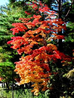 1-17.11.04 高野山紅葉-009.jpg
