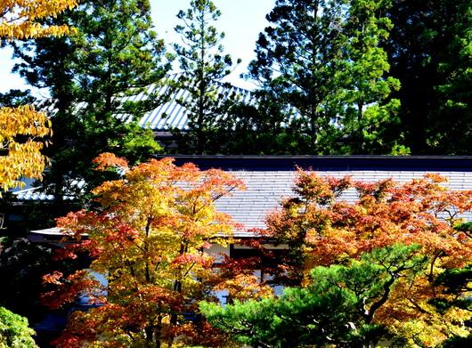 1-17.11.07 高野山紅葉-10.jpg