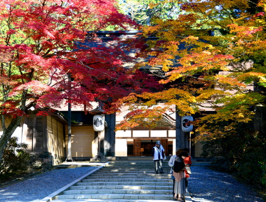 1-17.11.07 高野山紅葉-11.jpg