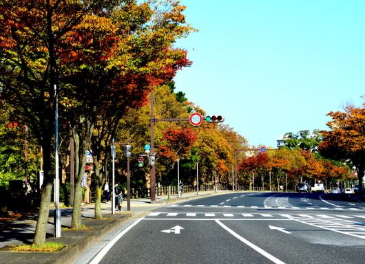 1-17.11.19 城内散歩-8.jpg