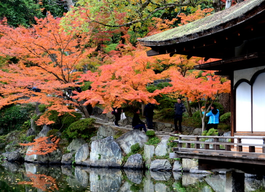 1-17.11.28 和歌山城公園の紅葉-1.jpg