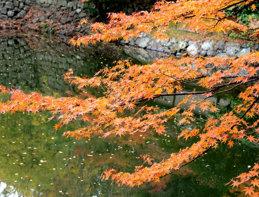 1-17.11.28 和歌山城公園の紅葉-2.jpg