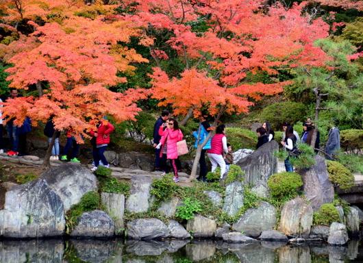1-17.11.28 和歌山城公園の紅葉-3.jpg