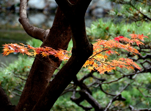 1-17.11.28 和歌山城公園の紅葉-4.jpg