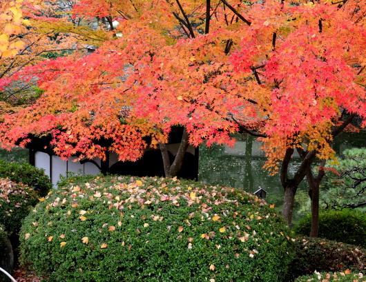 1-17.11.28 和歌山城公園の紅葉-5.jpg