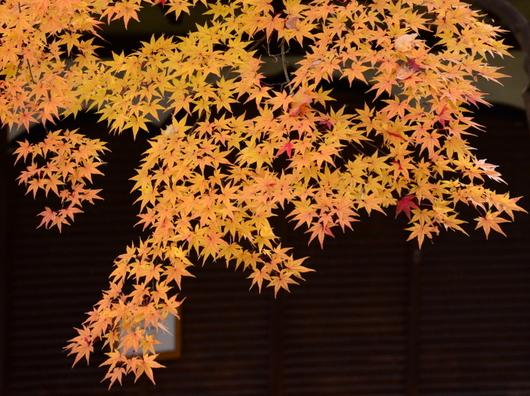 1-17.11.28 和歌山城公園の紅葉-6.jpg