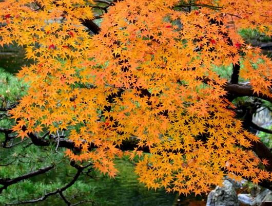 1-17.11.28 和歌山城公園の紅葉-8.jpg