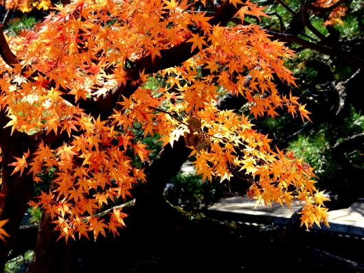 1-17.11.30 和歌山城公園の紅葉-3.jpg