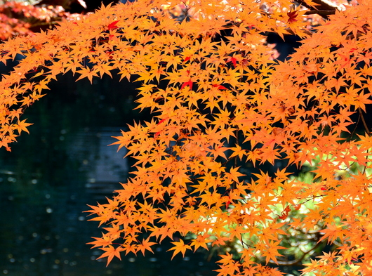 1-17.11.30 和歌山城公園の紅葉-4.jpg